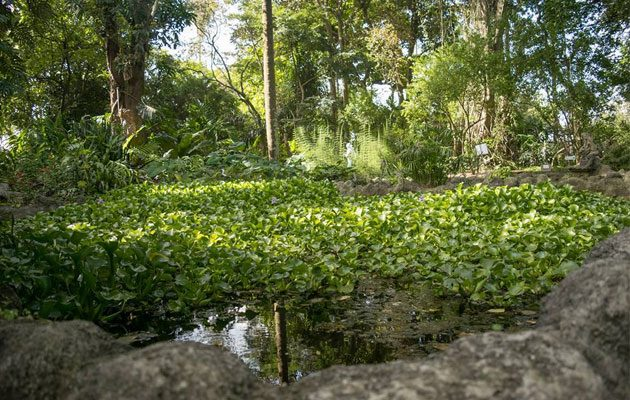 Jard n bot nico usac for Jardin botanico contacto