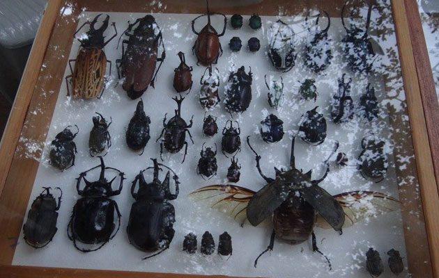 Museo de Historia Natural USAC - foto 1