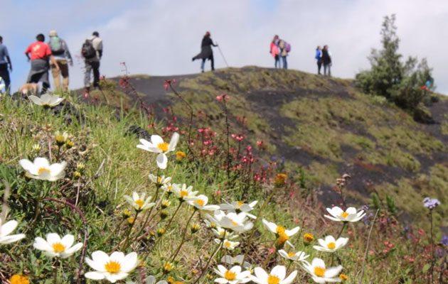 """Parque Nacional """"Volcán de Pacaya y Laguna de Calderas"""" - foto 5"""