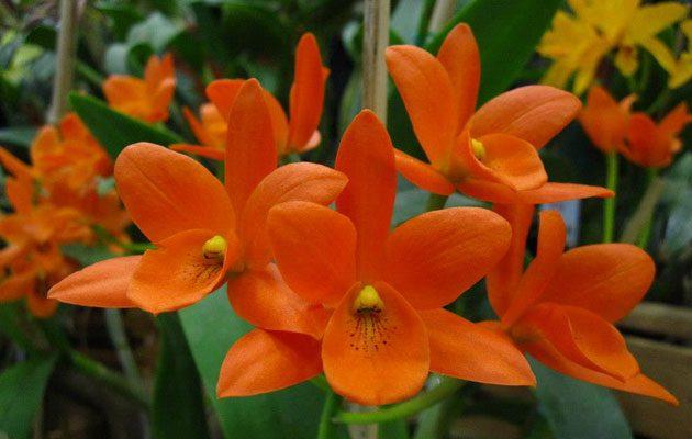 Orquídeas SyM La Pradera - foto 2