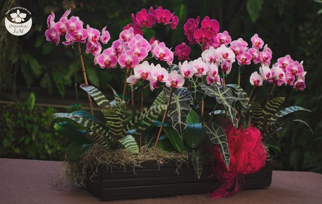 Orquídeas SyM Oakland Mall - foto 2