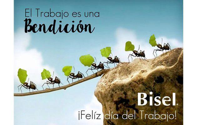 Bisel Plaza Arrazola - foto 4
