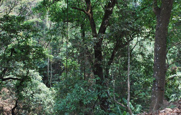 Parque Ecológico Jacarandas de Cayalá - foto 4