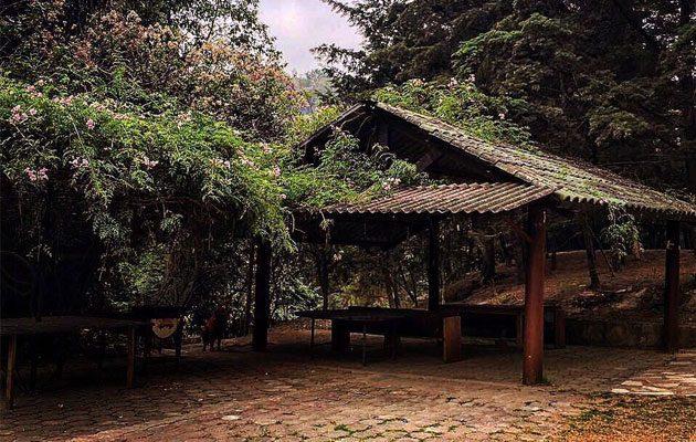 Parque Ecológico Jacarandas de Cayalá - foto 3
