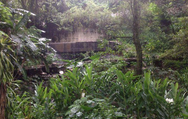 Parque Ecológico Jacarandas de Cayalá - foto 1