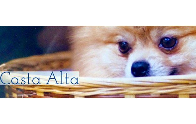 Criadero Casta Alta - foto 5
