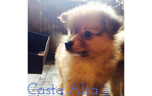 Criadero Casta Alta - foto 4