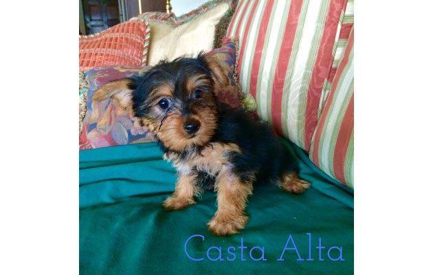 Criadero Casta Alta - foto 3