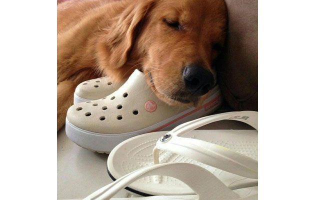 Crocs - foto 1