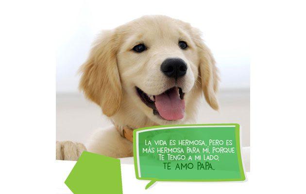Dogs Mart Miraflores - foto 4