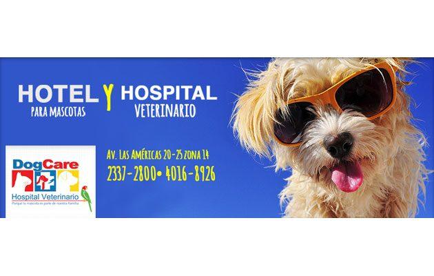 Dog Care - foto 2