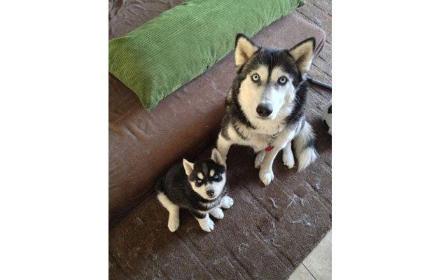 Dog Care - foto 1