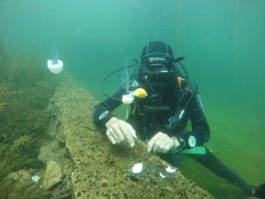 ATI Divers - foto 5
