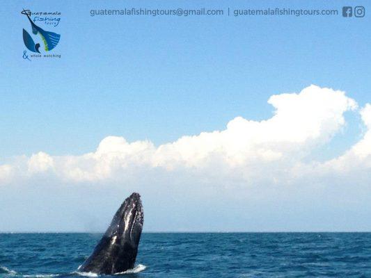 Guatemala Fishing Tours - foto 6