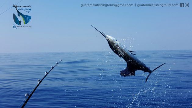 Guatemala Fishing Tours - foto 8