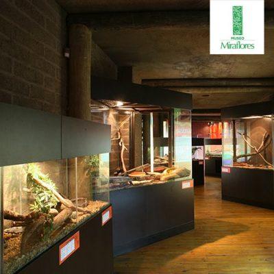 Museo Miraflores - foto 7