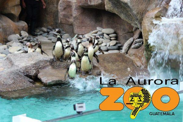 Zoológico La Aurora - foto 4
