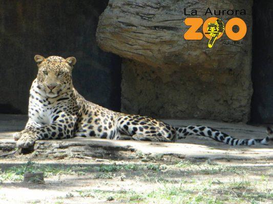 Zoológico La Aurora - foto 3