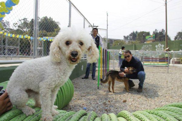 Albergue Municipal de Mascotas - foto 3