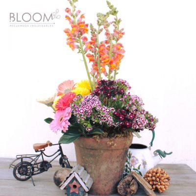 Bloom - foto 3