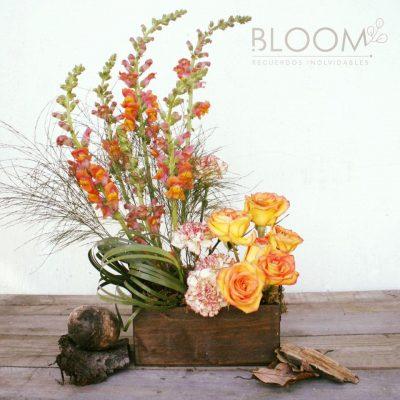 Bloom - foto 2