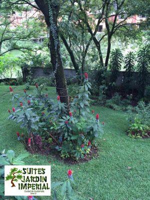 Jardín Imperial - foto 1