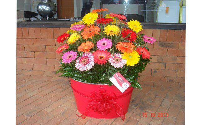 Flower Express Zona 10 - foto 4