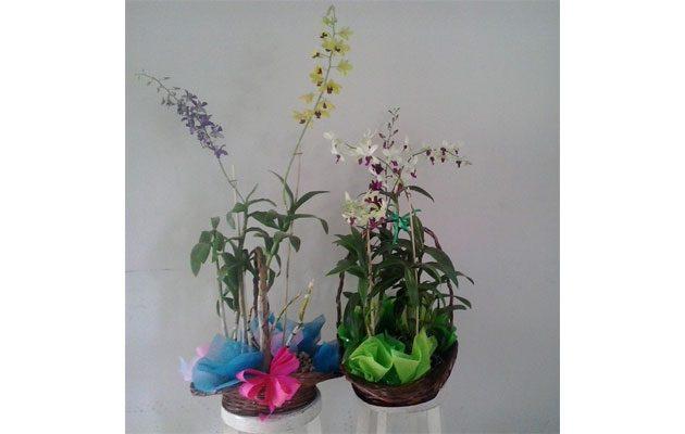 Planta Flor - foto 5