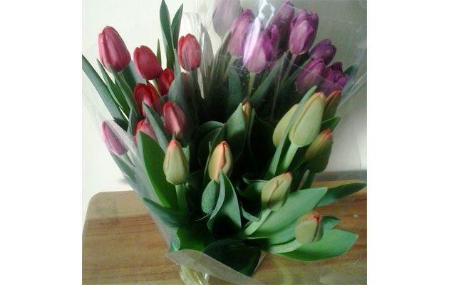 Planta Flor - foto 2