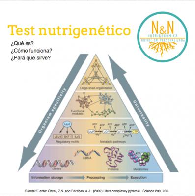 Nutrigenómica y Nutrición Personalizada - foto 1