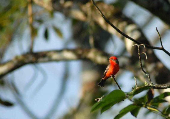 Parque Natural Ixpanpajul - foto 2