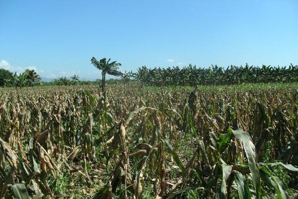 Secretaría de Asuntos Agrarios de la Presidencia - foto 5