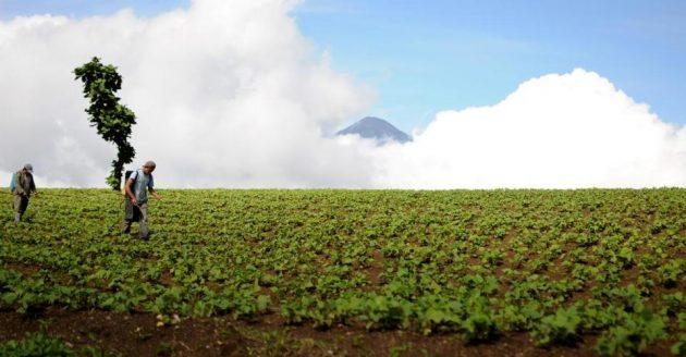 Secretaría de Asuntos Agrarios de la Presidencia - foto 2