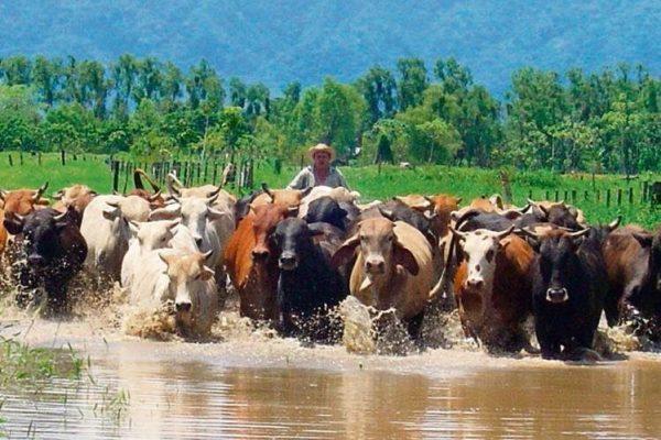 Secretaría de Asuntos Agrarios de la Presidencia - foto 4