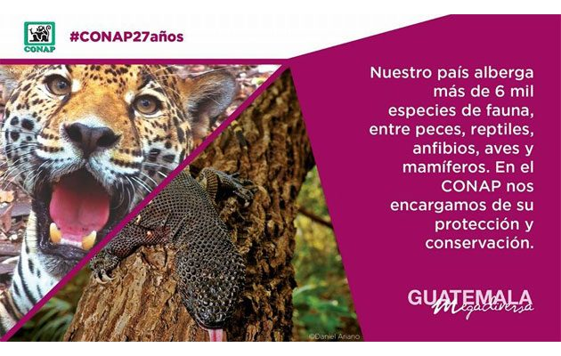 Consejo Nacional de Áreas Protegidas (CONAP) - foto 4
