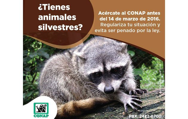 Consejo Nacional de Áreas Protegidas (CONAP) - foto 5