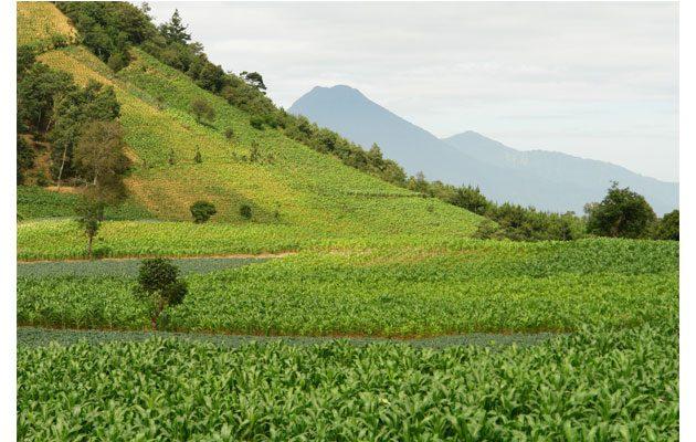 Ministerio de Agricultura, Ganadería y Alimentación (MAGA) - foto 3