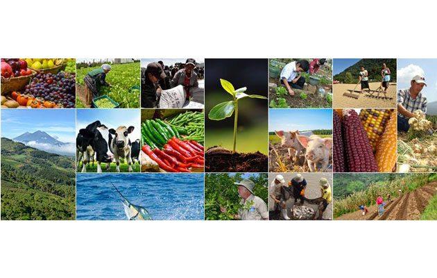 Ministerio de Agricultura, Ganadería y Alimentación (MAGA) - foto 1