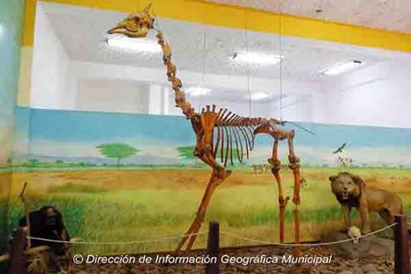 Museo Nacional de Historia Natural - foto 1