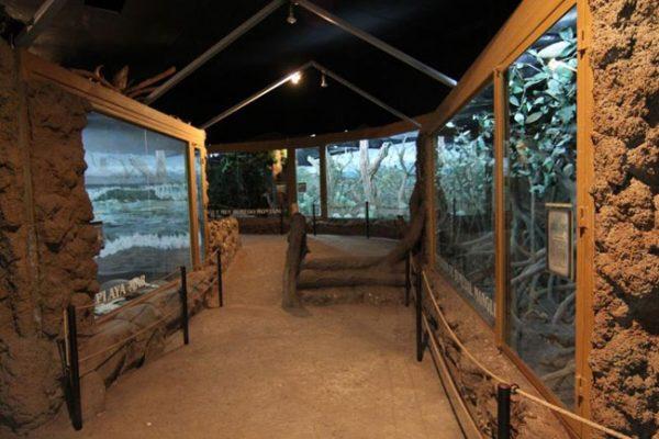 Museo Nacional de Historia Natural - foto 2