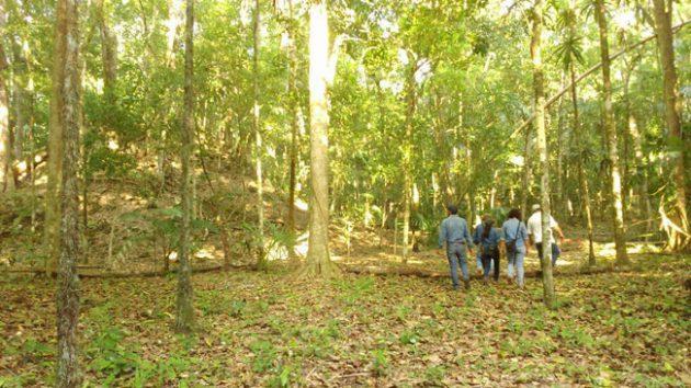Asociación de Comunidades Forestales de Petén - foto 2