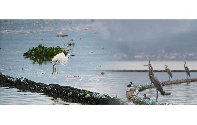Autoridad del Lago de Amatitlán- AMSA - foto 3
